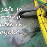 Is it safe to be around manatee in a kayak?