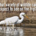 What variety of wildlife can I expect to see on the trip?