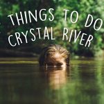 Top things to do in Crystal River