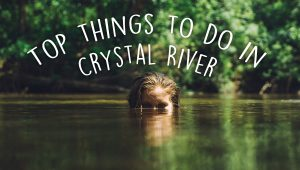Top Things To Do In Crystal River 300x170